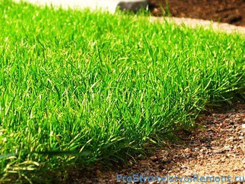 Искусственная трава или натуральный газон?